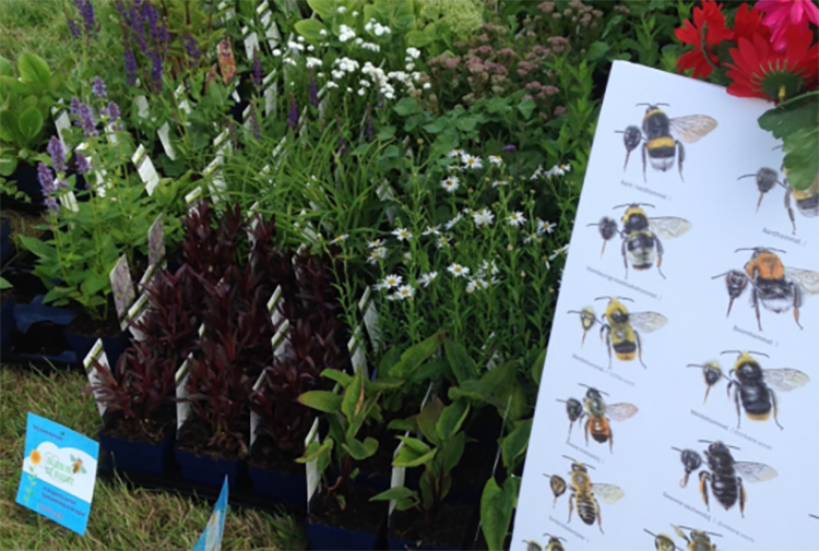 Leidse Bijenmarkt