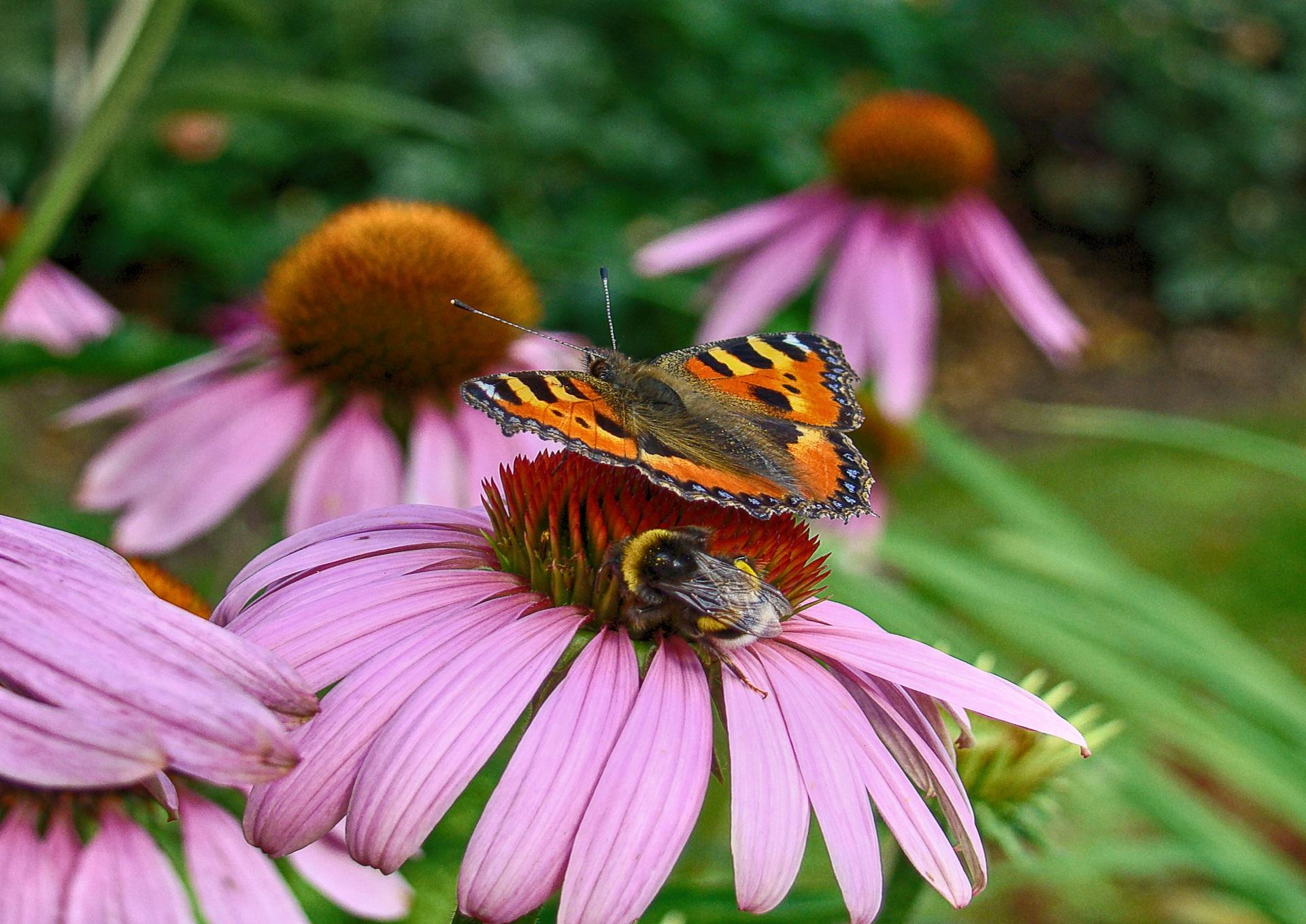 Lezing bij- en insectvriendelijke tuin, Zoetermeer
