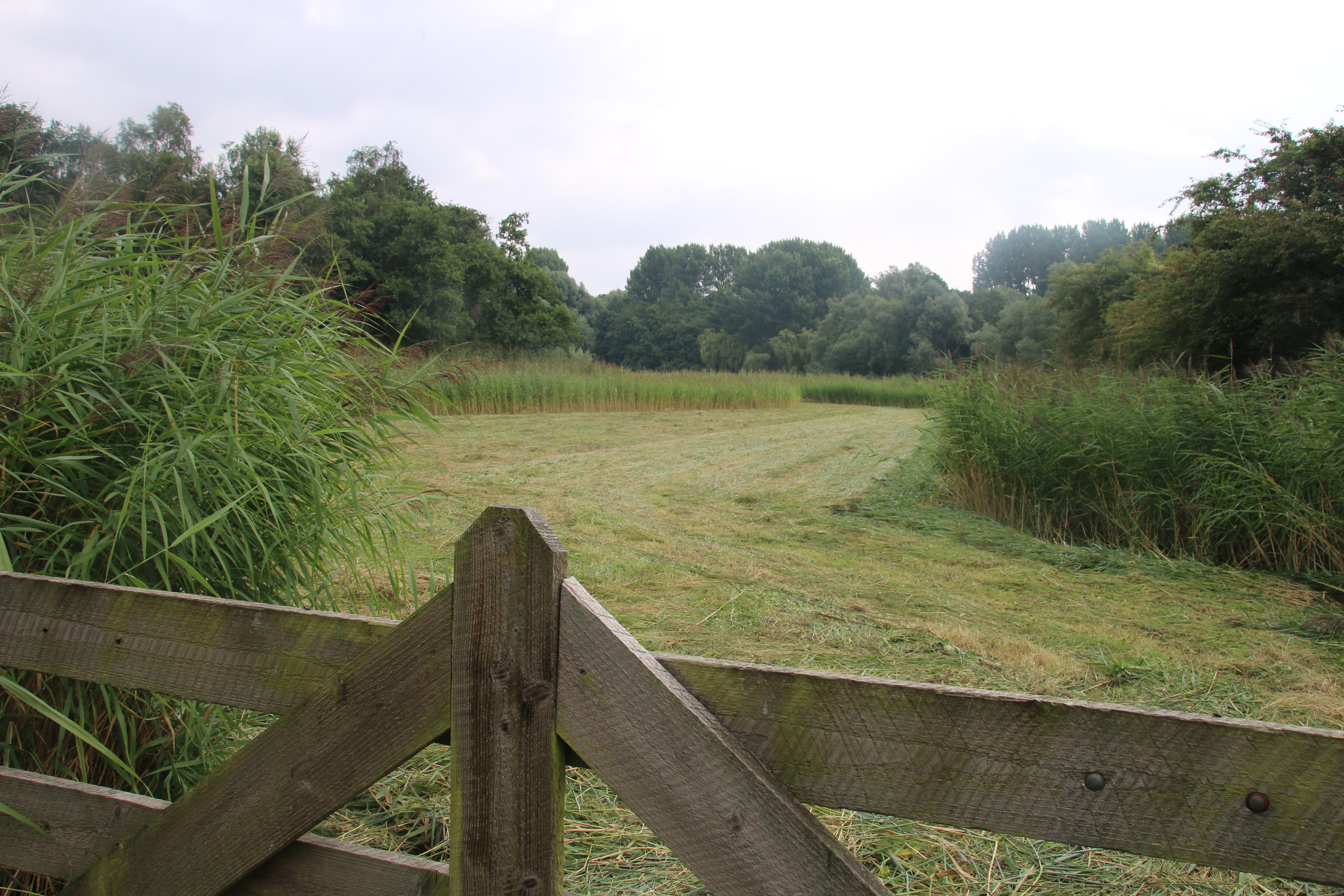 Zomerse rondleiding Natuur- en landschappentuin, Zoetermeer