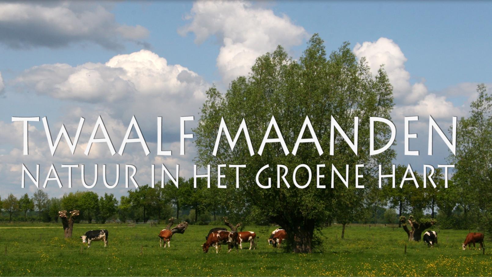 Film: Twaalf maanden natuur in het Groene Hart, Alphen aan den Rijn
