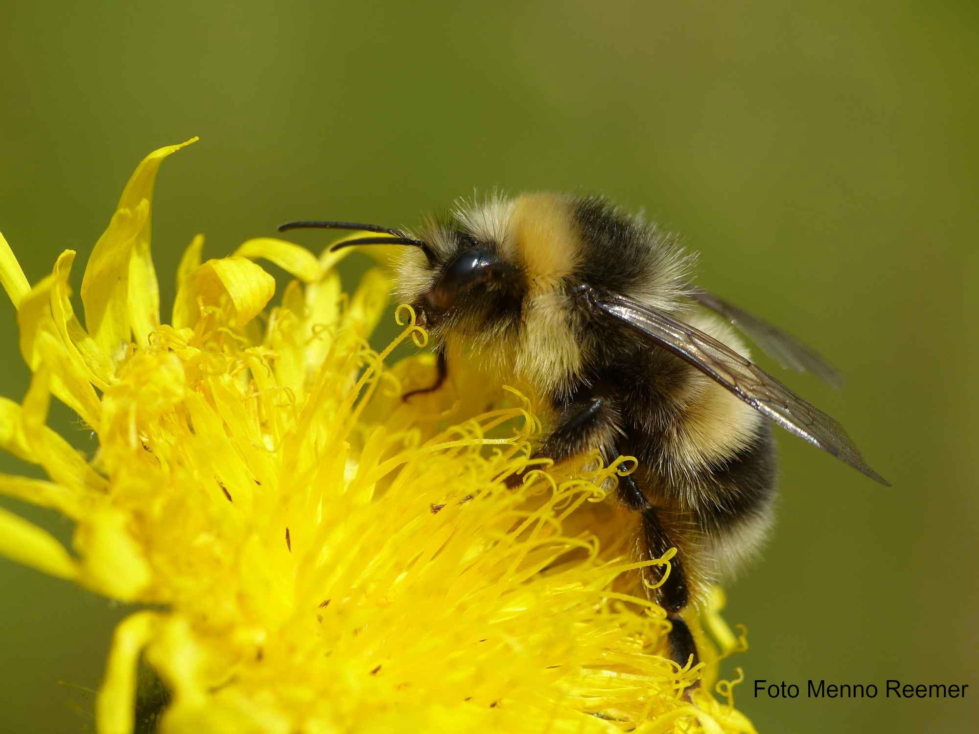 Helpdesk Bijenlandschap: advies voor professionals