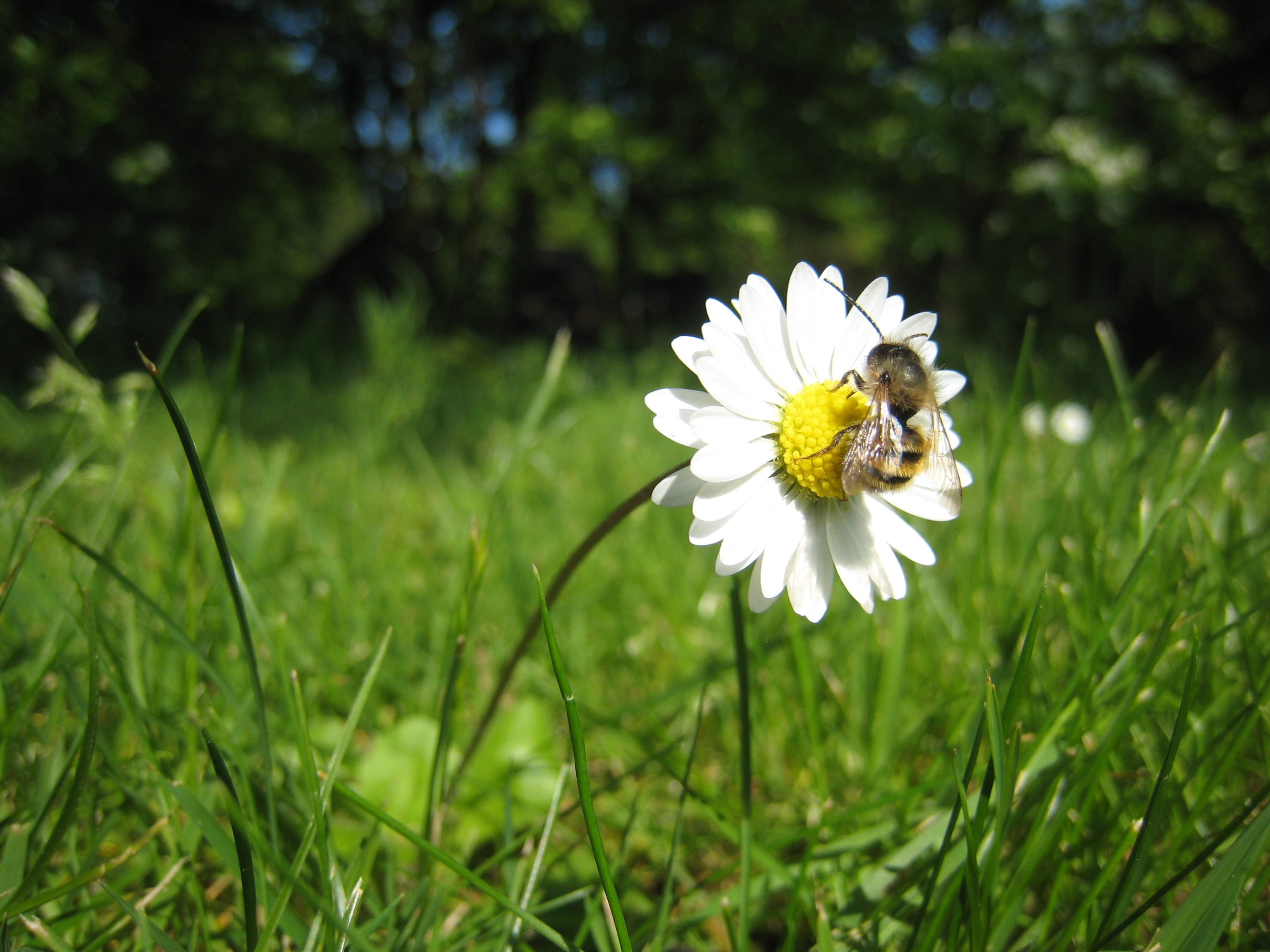 Prijzen voor de mooiste bijenfoto's