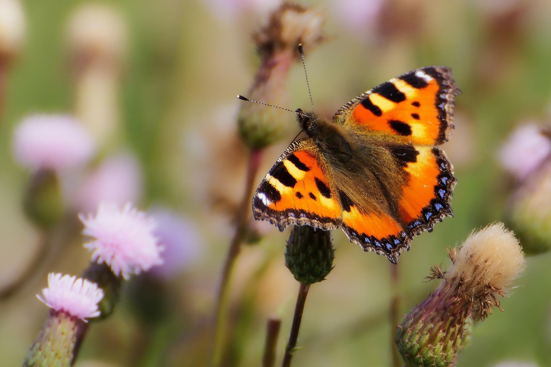 Speuren naar vlinders op Lentevreugd, Wassenaar