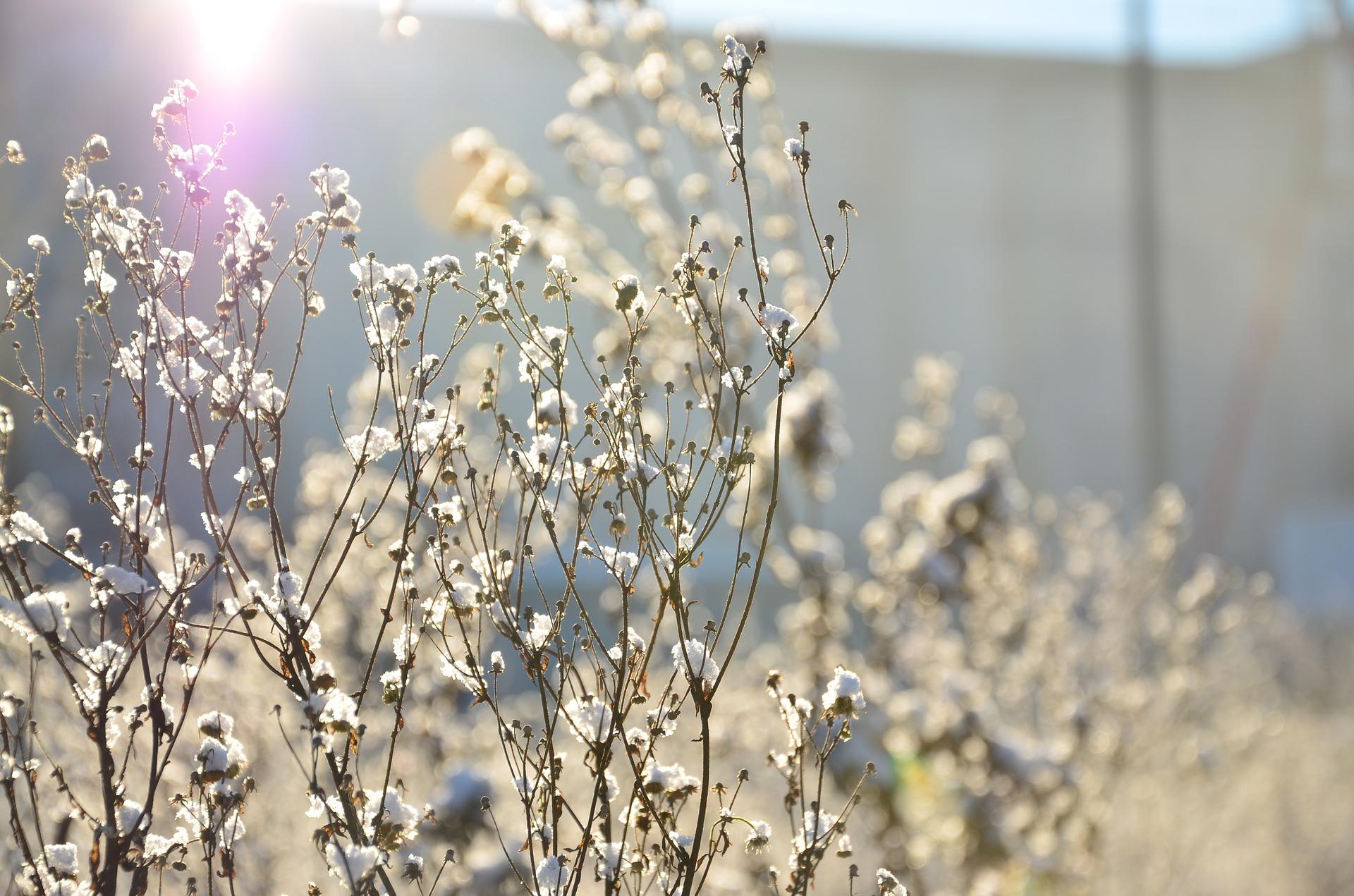 Laat stengels van uitgebloeide bloemen staan voor de bijen
