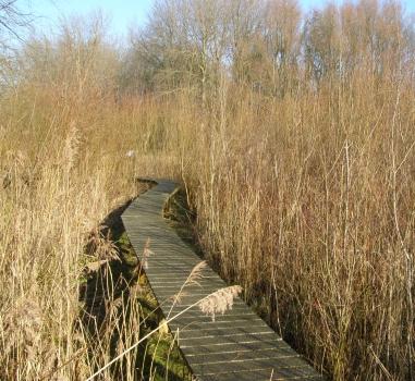 Winterwandeling Natuurtuin Zoetermeer