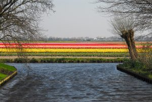 water bollenveld Wouter Koppen 15522