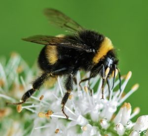 bee-535247_1280_400x367_acf_cropped