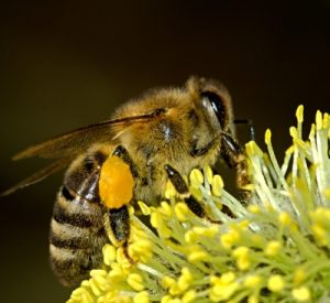 bees-18192_1920_400x367_acf_cropped