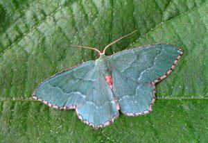 moth-1799608_1920