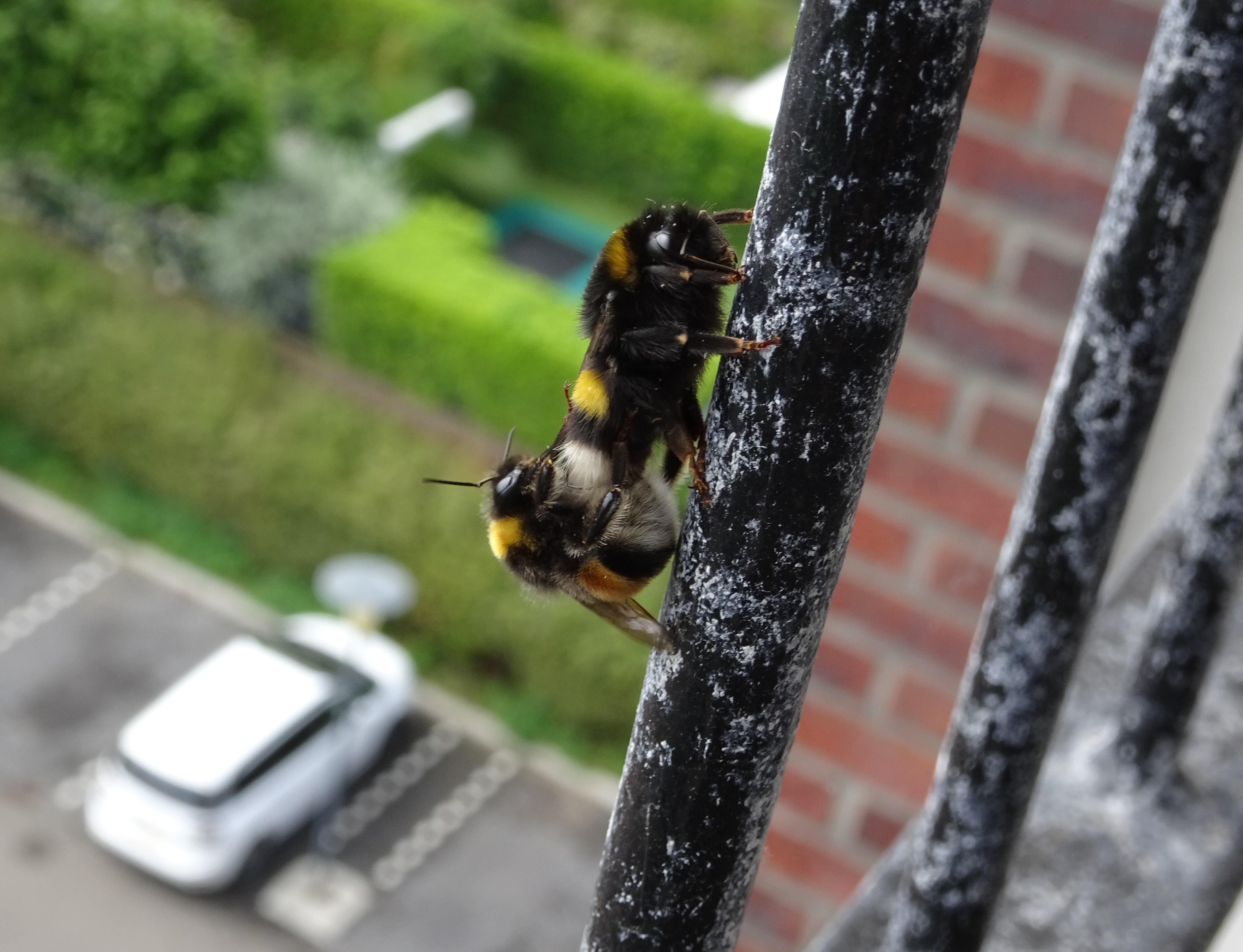Winnaars fotowedstrijd Bijenlandschap 2018  bekend