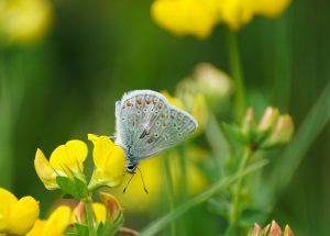 butterfly-2424349_1920
