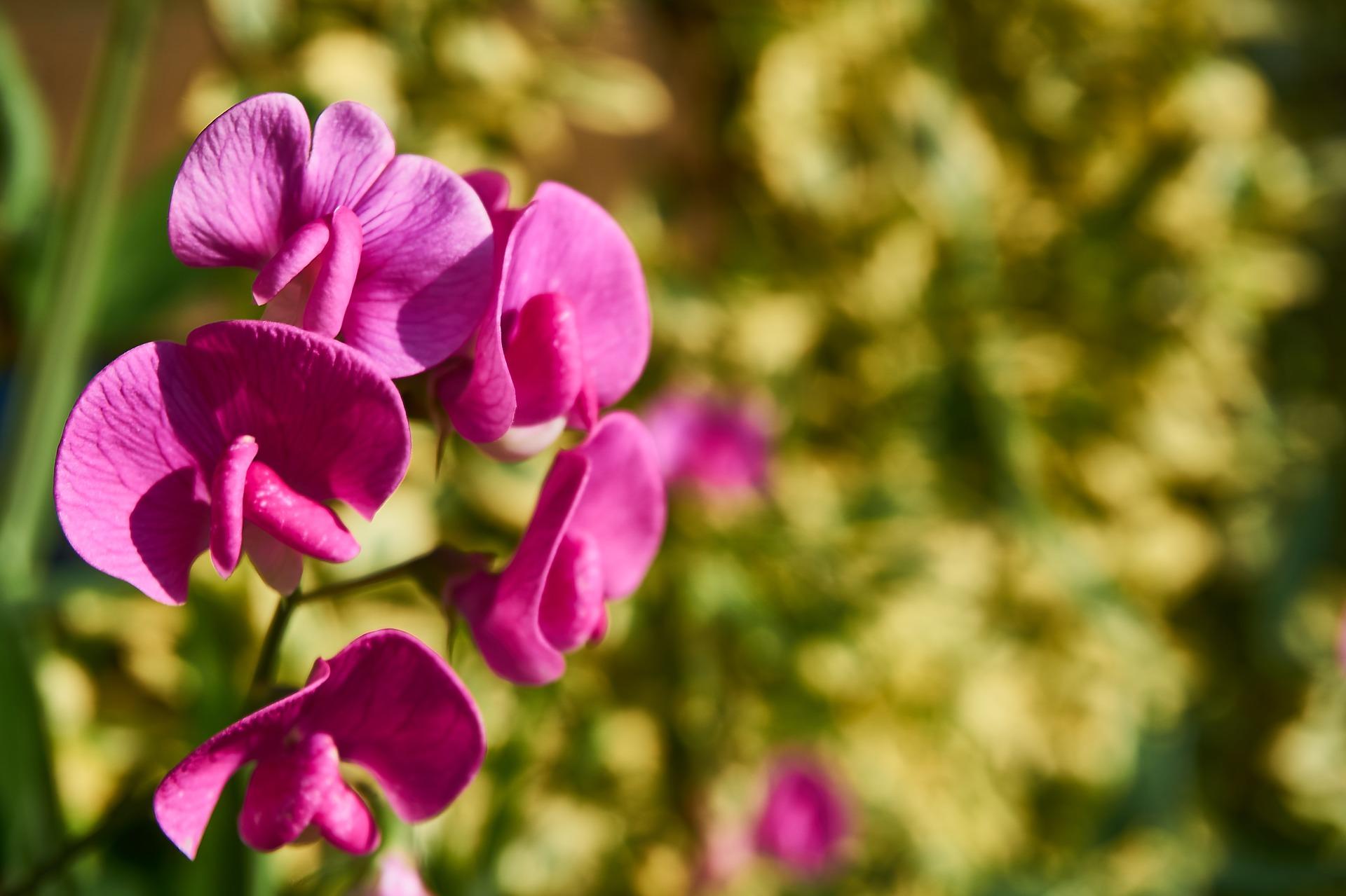 Planten verdroogd? Deze bijenplanten kunnen wèl tegen de droogte