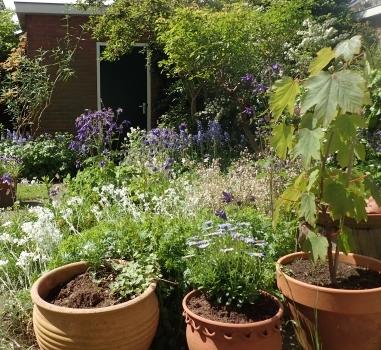 Lezing aanleg en onderhoud kleine tuin