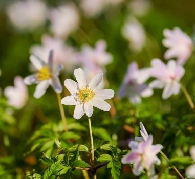 Verwelkom de voorjaarsbloeiers op Rhijngeest
