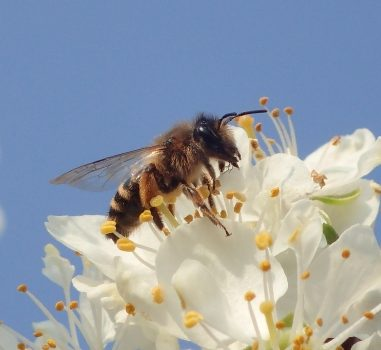 Bijen tellen in buurttuin Zoete Aarde
