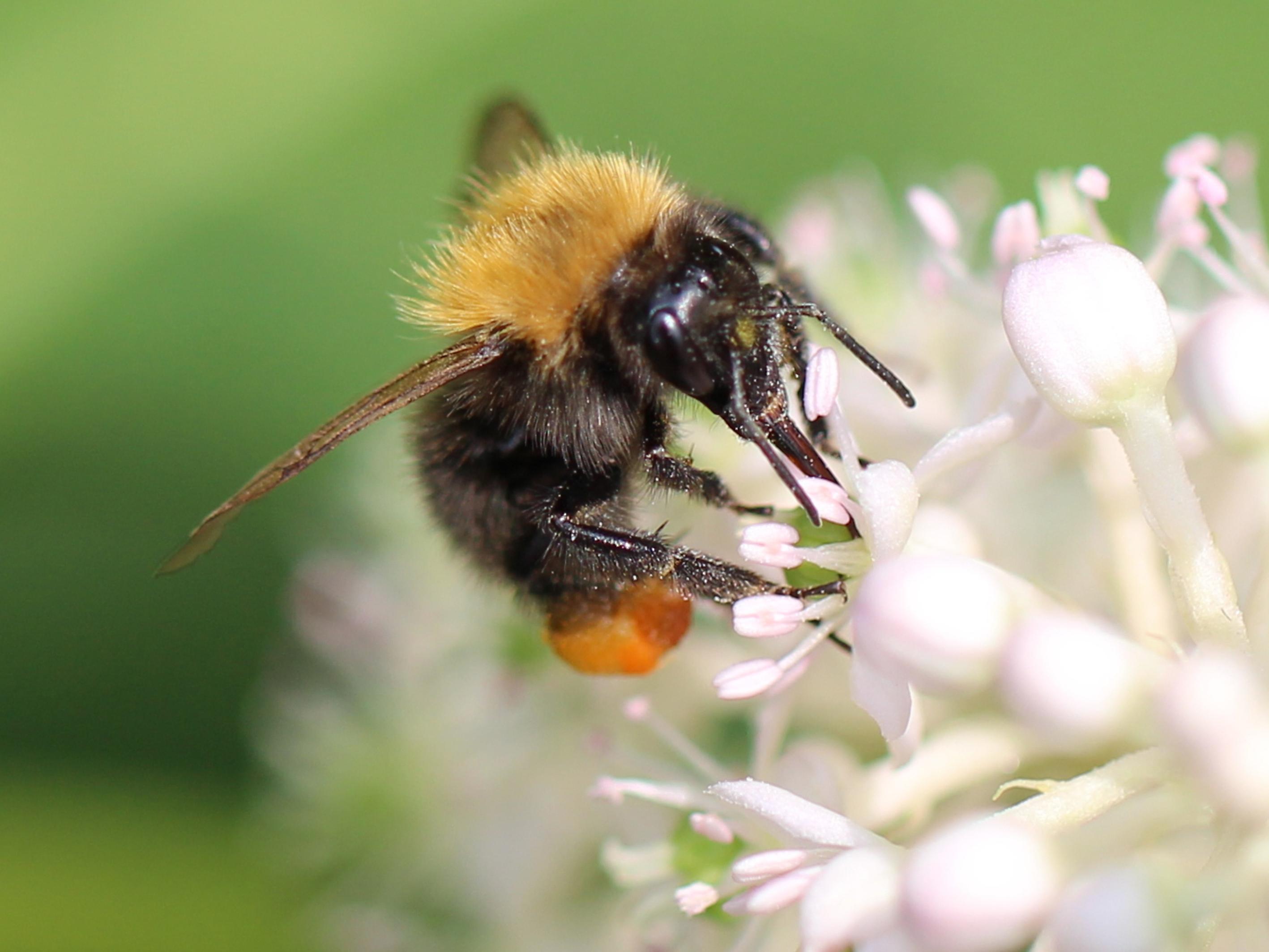 Stuur je mooiste foto in voor de Bijenlandschap Fotowedstrijd!