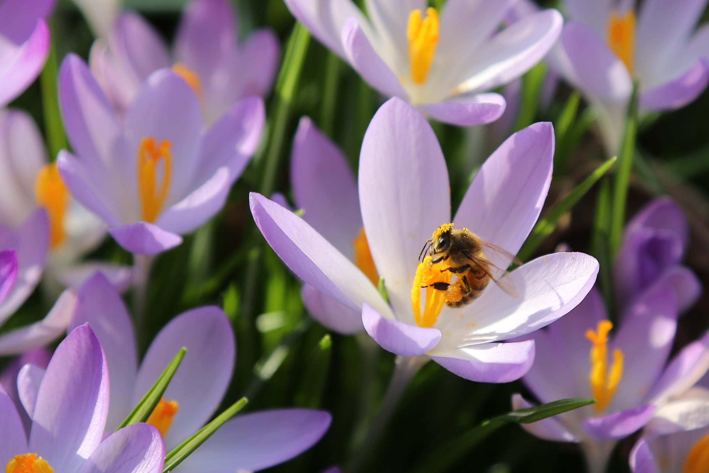 Uitslag fotowedstrijd Groene Cirkel Bijenlandschap