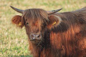 beef-3549527_1920