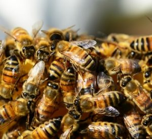 honey-bees-326334_1920_400x367_acf_cropped_400x367_acf_cropped