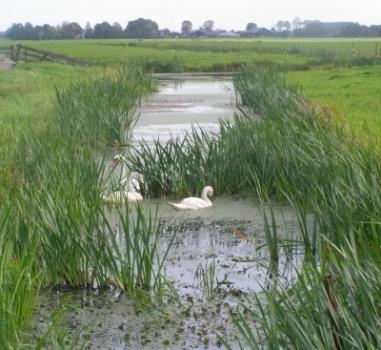 Najaarswandeling door de polder, Zoeterwoude
