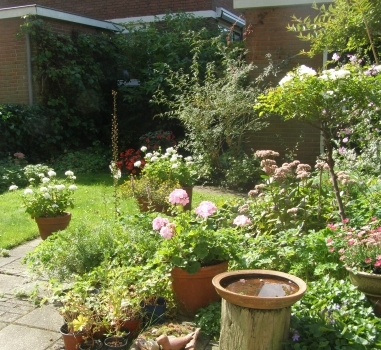 Tuinieren met en zonder regen, Alphen aan den Rijn