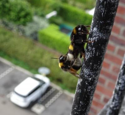 Studiedag Insecten in de stad, Utrecht – EIS Kenniscentrum Insecten