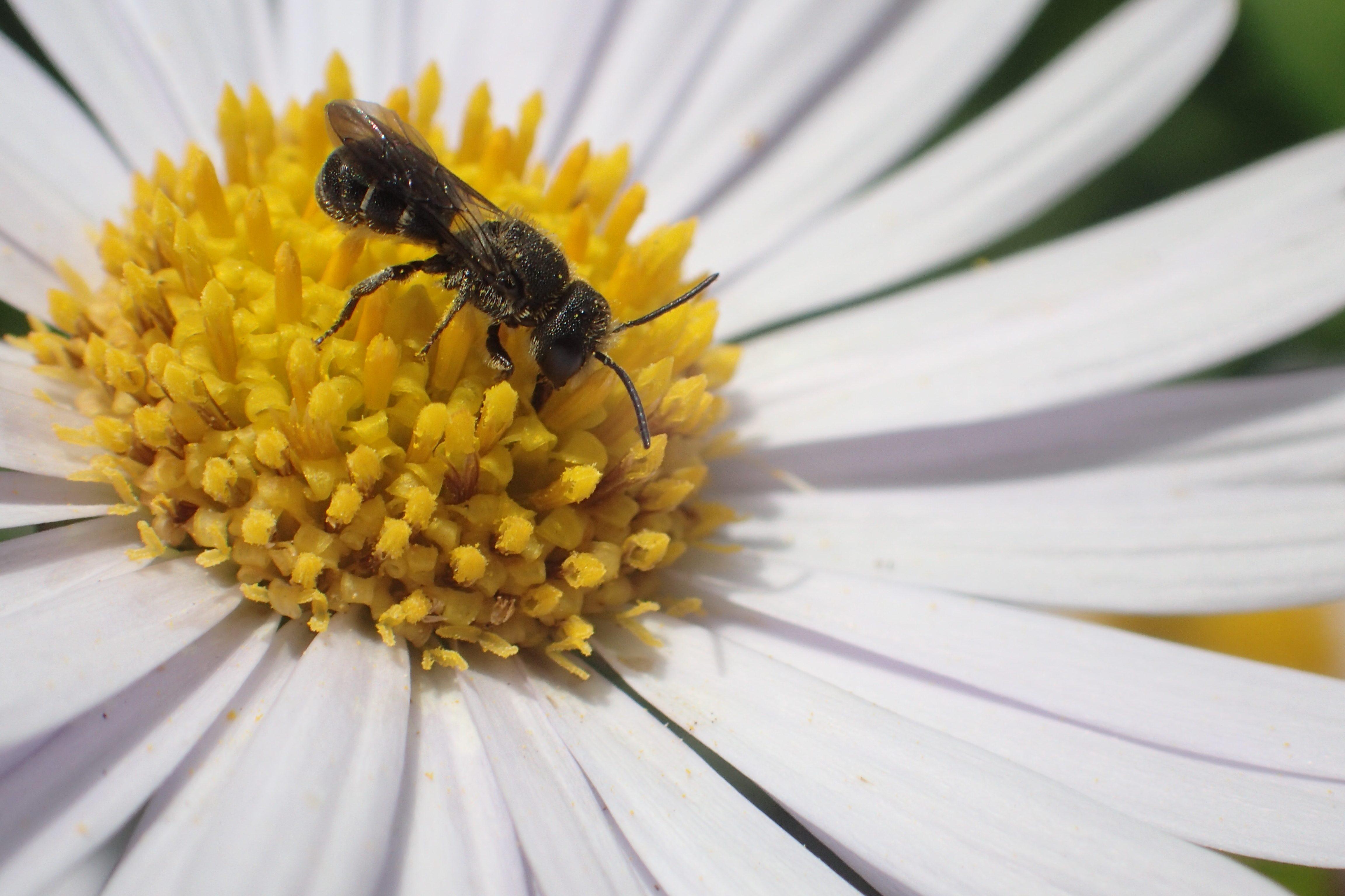 Lezing Bijenparadijs Archeon, Alphen aan den Rijn