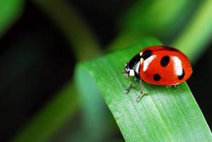 ladybug-973917_1920