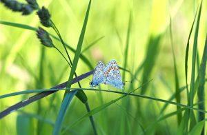 meadow-1344276_1920