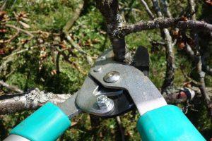 pruning-shears-535350_1920