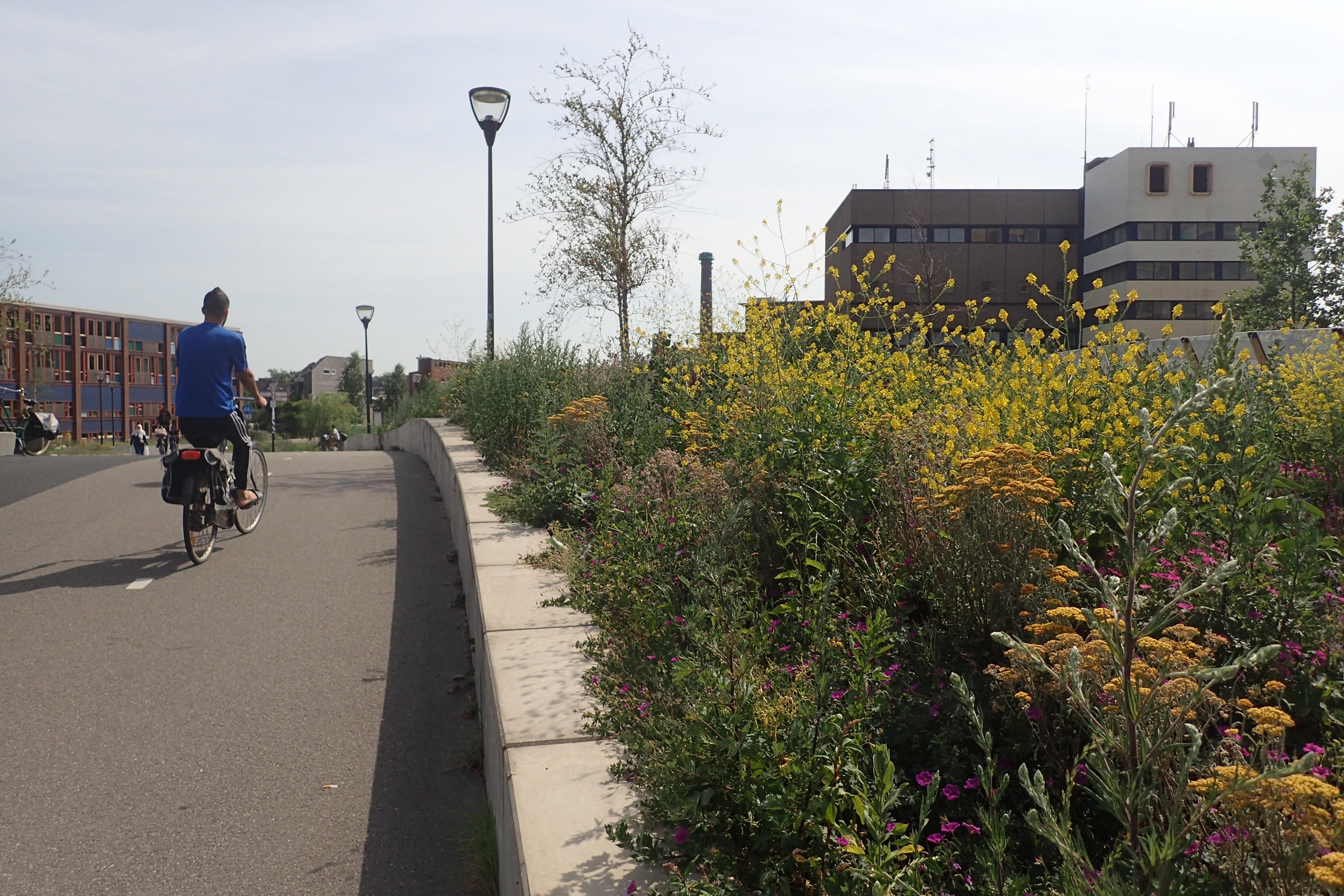 Bijenbloemen en insectenhotels op Leids viaduct