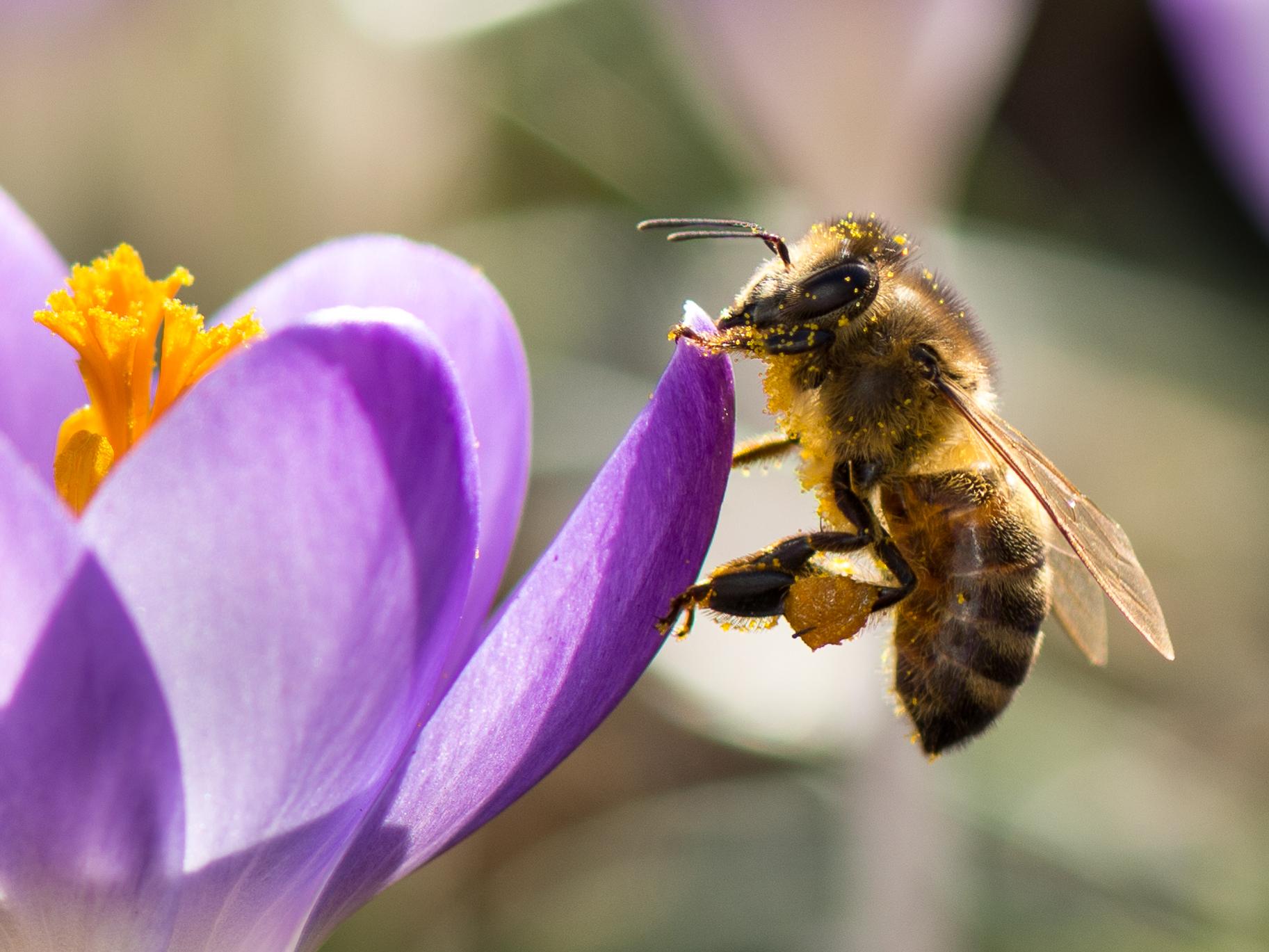 Een keuze maken uit prachtige foto's: Jury Fotowedstrijd Bijenlandschap gaat aan de slag