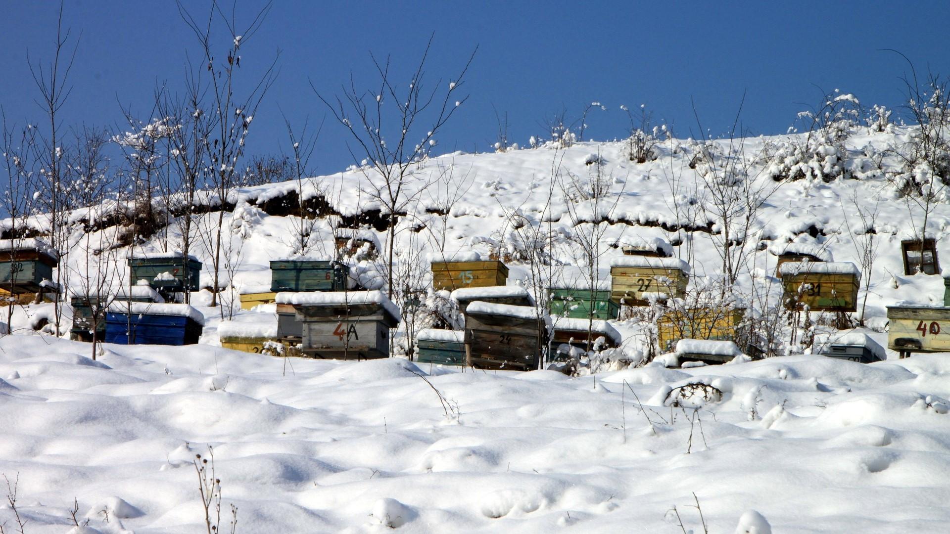 Geen éénduidige oorzaak voor wintersterfte honingbijen
