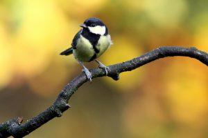 bird-205349_1920