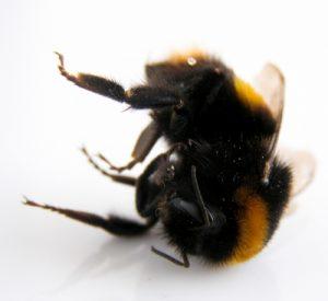 bumblebee-2229030_1920_400x367_acf_cropped
