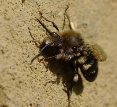 Bijen tellen in het Archeon