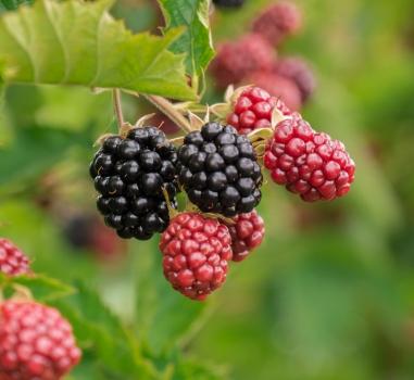 Lezing Oogst fruit uit je eigen tuin. Alphen aan den Rijn. GAAT NIET DOOR
