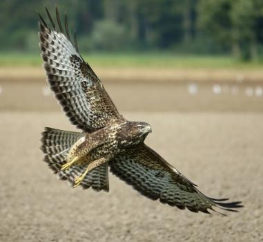 Lezing: Hoe vliegen vogels en vlinders? Alphen aan den Rijn