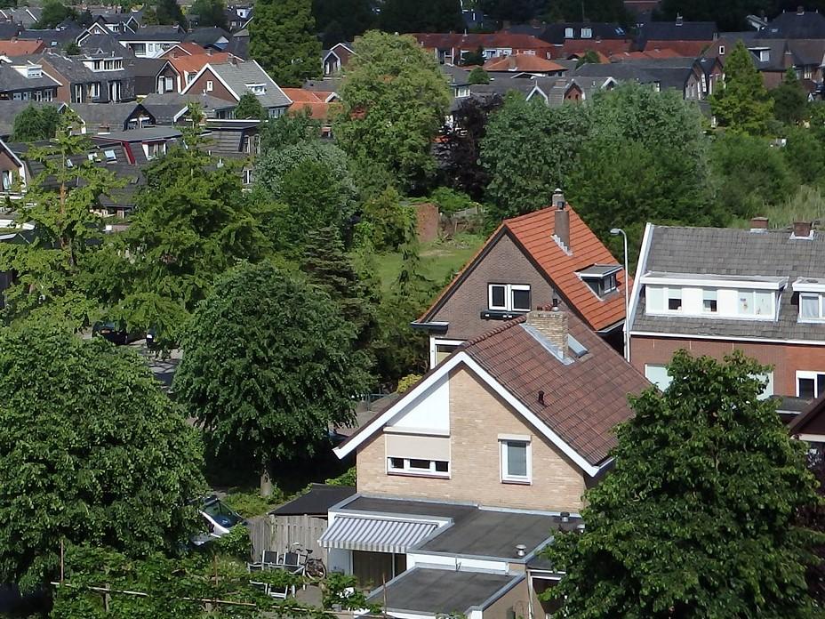 De waarde van bomen voor de stad