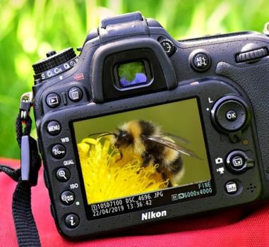 Fotowedstrijd Bijenlandschap 3 mei – 7 juni 2020