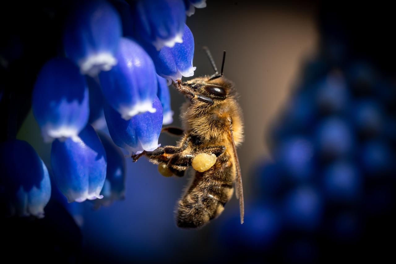 Uitslag Fotowedstrijd 2020 Groene Cirkel Bijenlandschap
