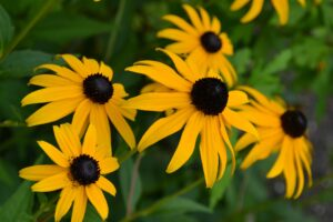 flower-432472_1920 (1)