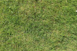 grass-326562_1920