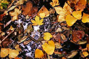 autumn-leaf-3871833_1920