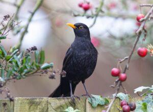 blackbird-5980636