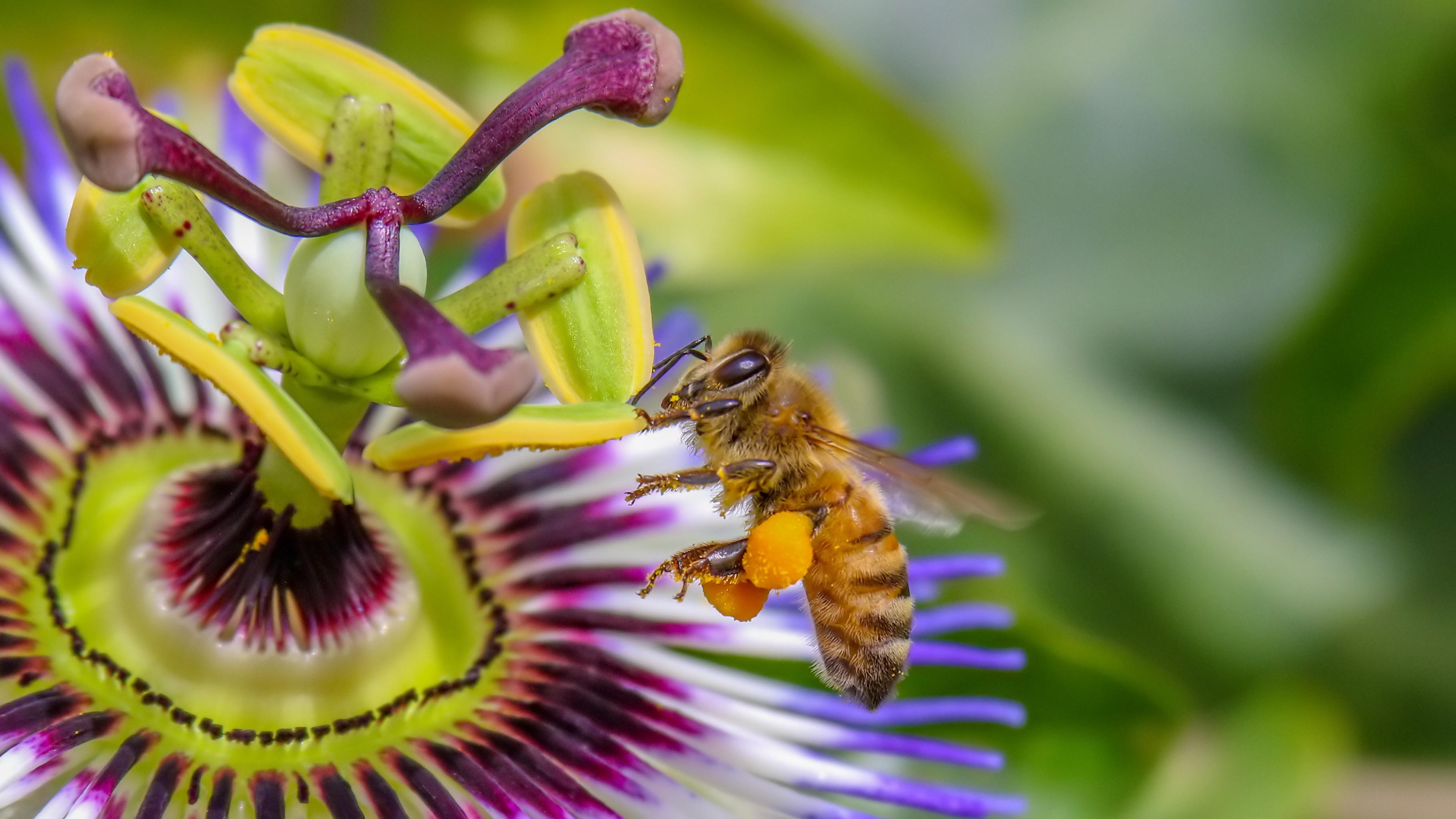 Winnaars fotowedstijd Groene Cirkel Bijenlandschap 2021 bekend