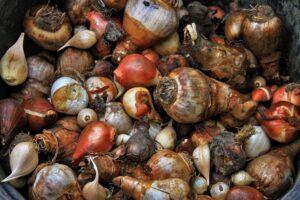 onions-4936235_1920